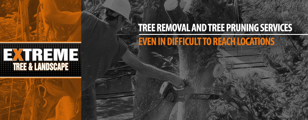 Tree removal and tree pruning services even in difficult to reach locations